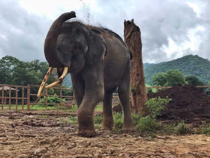 Exploited Elephant Gets Loving New Home Just in Time for World Elephant Day