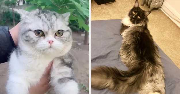 14 Cat Posts From This Week That'll Make Everything A Little Bit Better