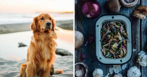 Your Food Preferences Will Reveal What Pet You Should Have