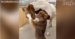 Excited Dog with Horse Friend Learns to Stand on His Hind Legs to Hug His BFF