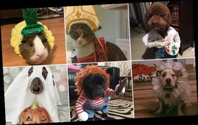 Pet parents share their incredible animal Halloween costumes