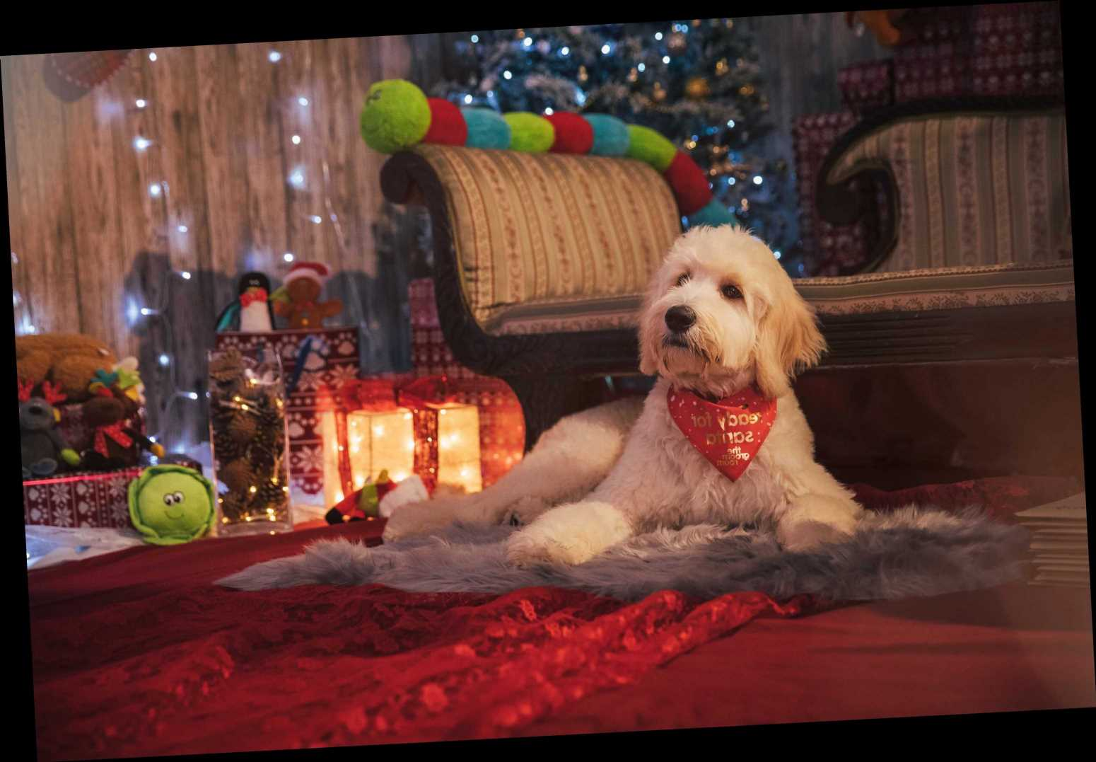 Pets at Home is offering dog spa treatments so your pooch can smell of gingerbread for Christmas – The Sun