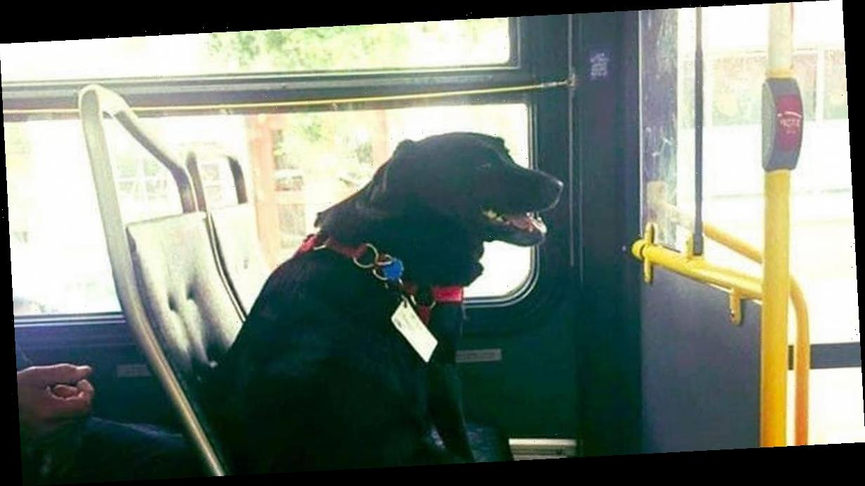 Dog rides bus to and from dog park every day to play for two hours by herself