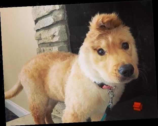 Meet the One-Eared Puppy That's Sure to Make Your Day