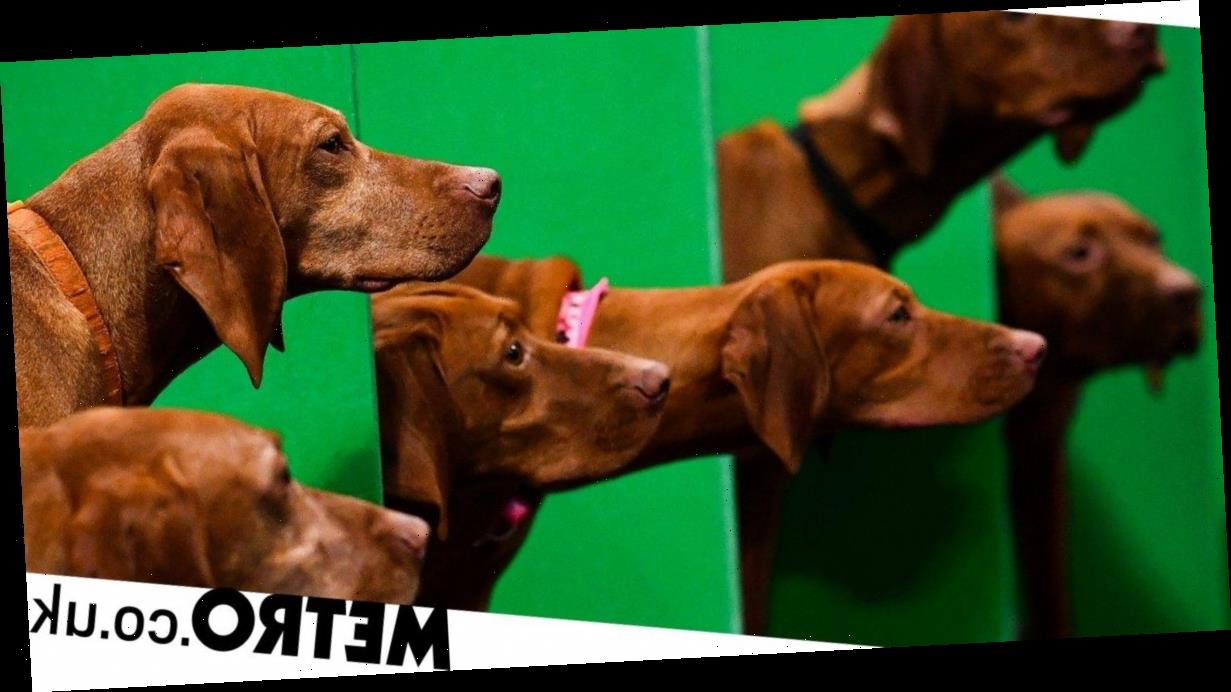 New show Snoop Dogs sees celeb pets wearing Go-Pros and give it a Bafta already