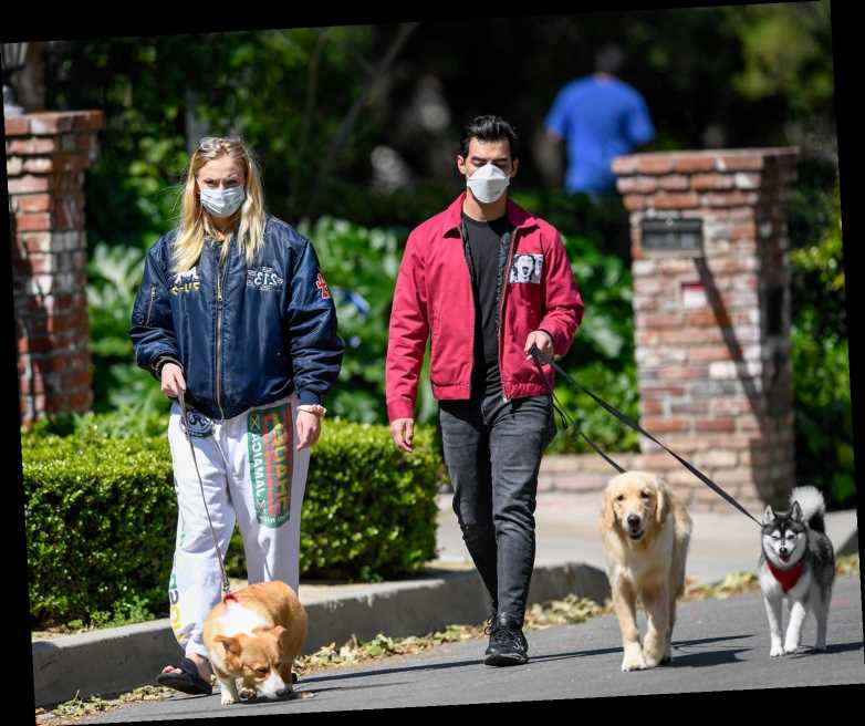 Sophie Turner and Joe Jonas Stay Safe by Wearing Masks as They Walk Their Dogs Plus Another Pooch