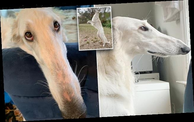 Dog owner believes her pup has the longest nose in the world