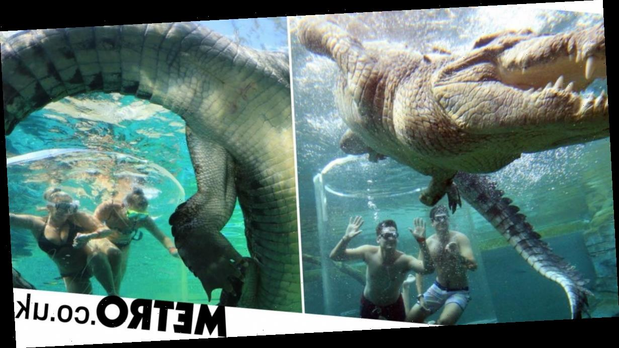 Theme park drops you into a tank of crocodiles at feeding time