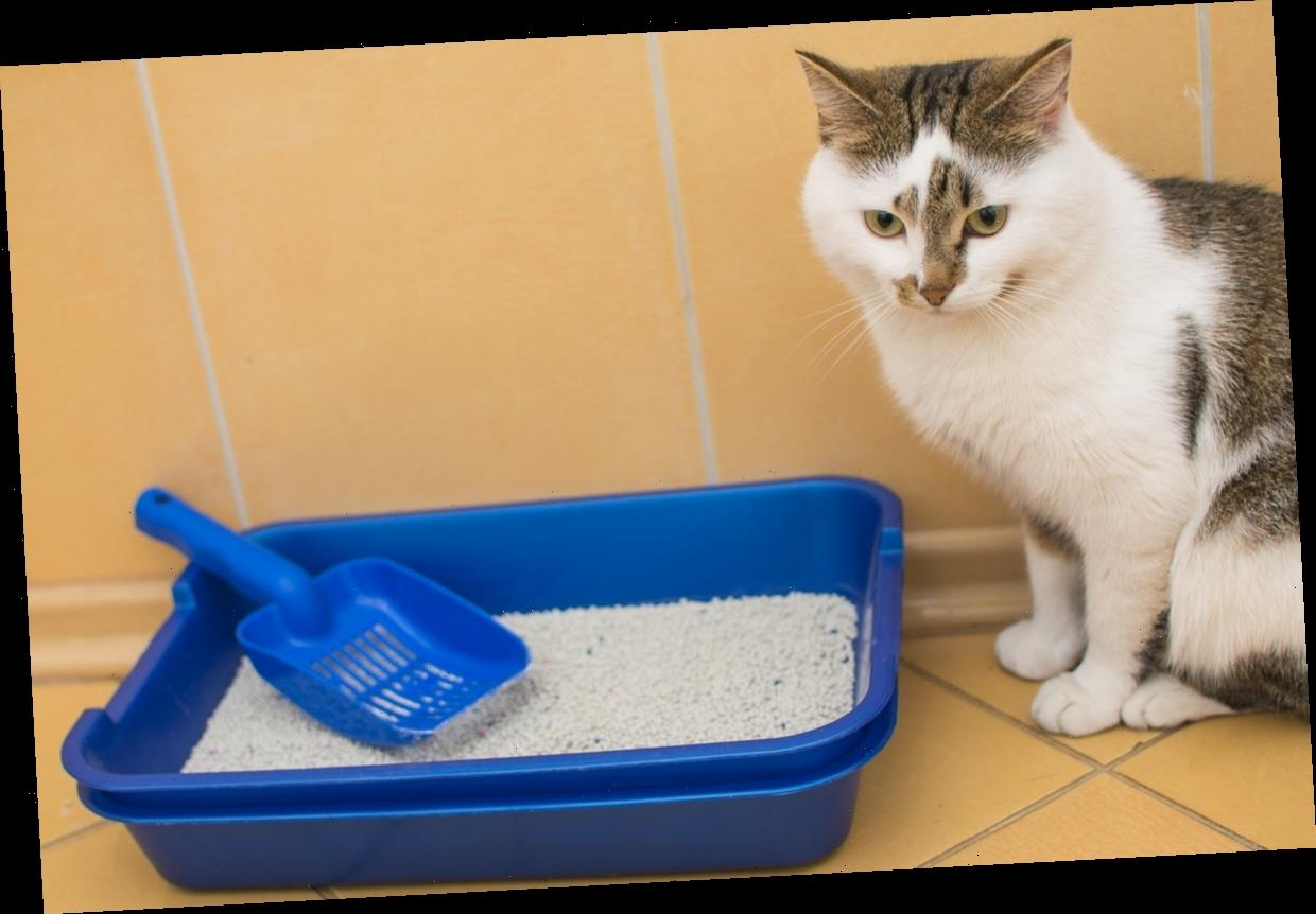5 Cat Litter Scoops That Actually Make Cleaning Out The Box *Way* Less Of A Chore