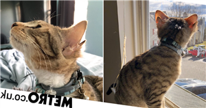 Cat born with four ears finds his forever home