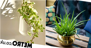 The best houseplants to relieve stress and anxiety