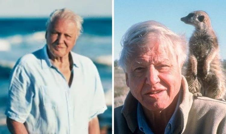 David Attenborough opens up on 'humiliation' filming latest BBC project
